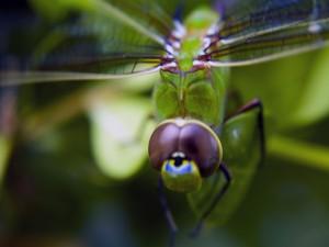 La cabeza de una libélula