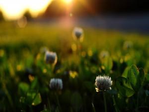 Postal: Flores silvestres iluminadas por el sol al amanecer