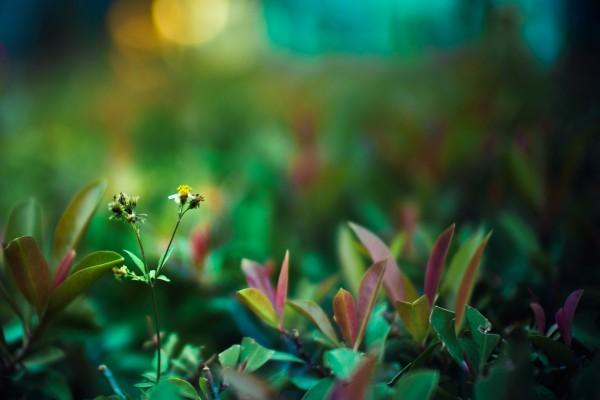 Tallo con una pequeña flor entre las plantas