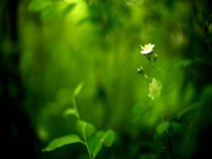 Fino tallo con dos florecillas