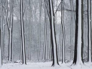 Nieve sobre los troncos de los árboles