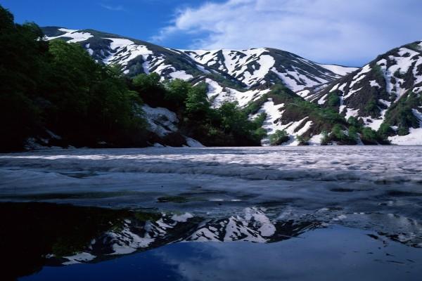 Montañas con árboles verdes y nieve