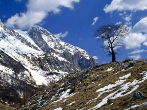 Árbol en lo alto de la colina