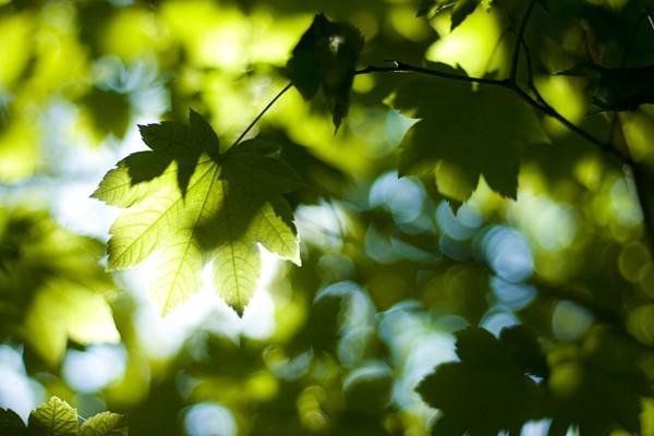 El sol iluminando las hojas de los árboles