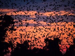 Cielo cubierto de murciélagos