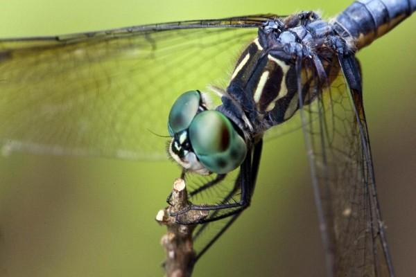 Una libélula vista de cerca