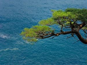 Postal: Un árbol próximo al mar