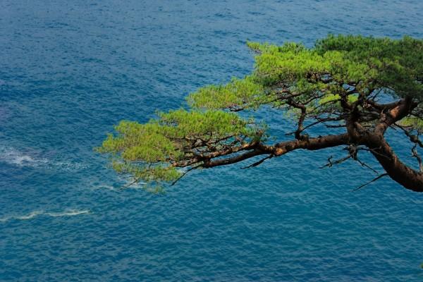 Un árbol próximo al mar