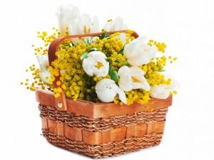 Cesta con tulipanes blancos y mimosas