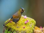 Un pájaro sobre una piedra con musgo y florecillas rosas