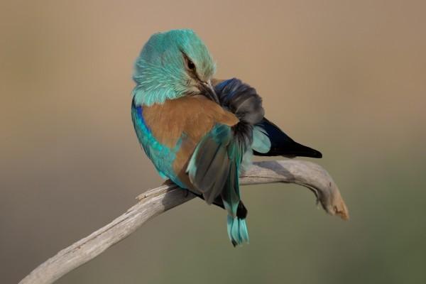 Pájaro con un bello y colorido plumaje