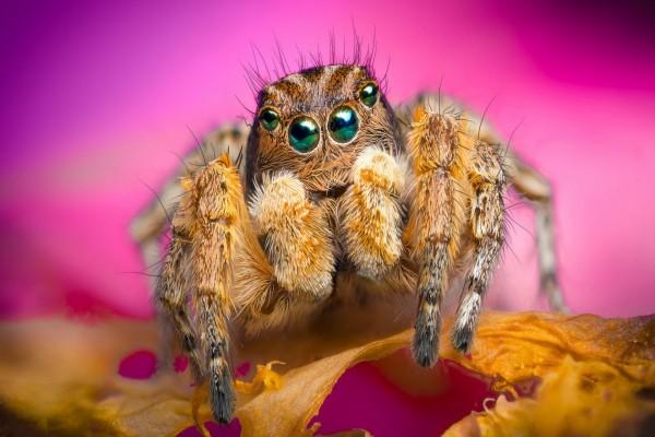 Una araña sobre el pétalo de una flor