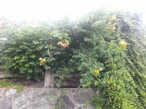 Plantas encima de un muro de piedra