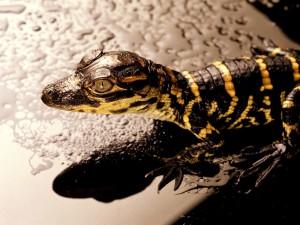 Postal: Cabeza de un gran lagarto