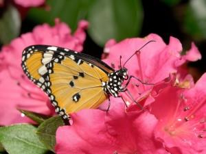 Una maravillosa mariposa posada en una flor
