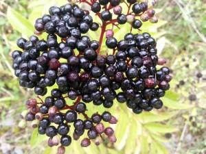 Frutos negros