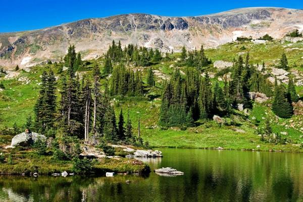Pinos junto a las tranquilas aguas de un lago en Canadá