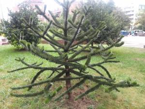 Un árbol con originales ramas