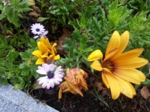 Flores entre las plantas