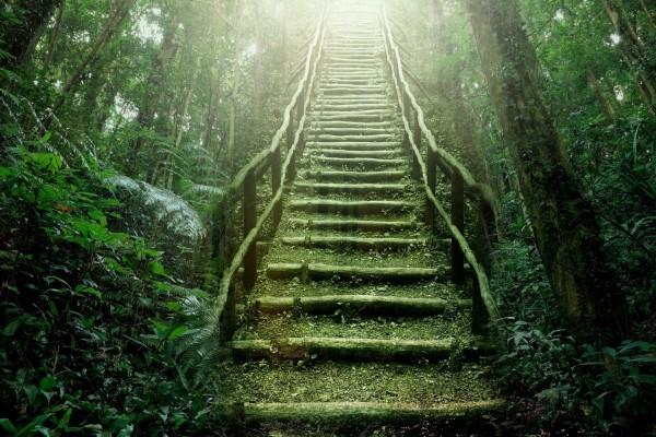Escaleras en un bosque verde
