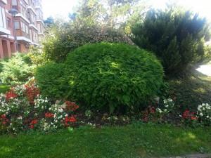 Postal: Árboles y flores en un jardín