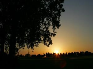 El sol al atardecer tras los árboles y molinos