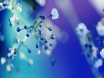 Pequeña flor blanca en una rama con brotes