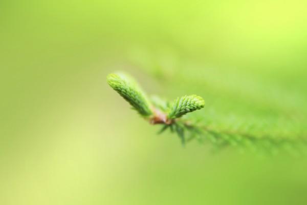 Brotes verdes en una rama