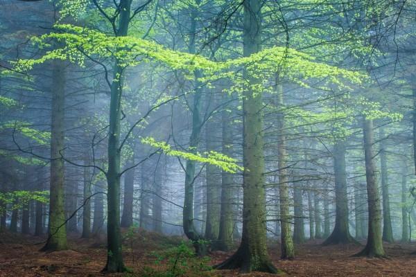 Comienzo de la primavera en un bosque con niebla