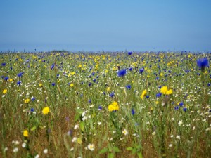 Postal: Un prado con bellas flores