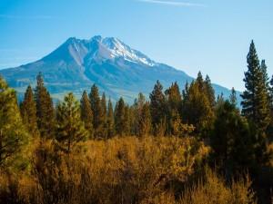 Postal: Bosque cercano a una gran montaña