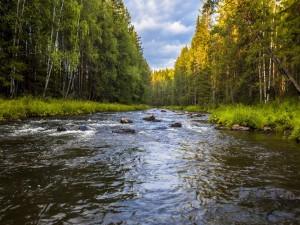 Gran río entre árboles