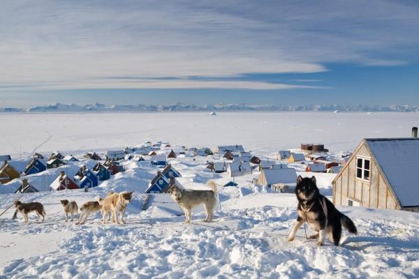 Perros en el pueblo de Ittoqqortoormiit (Groenlandia)