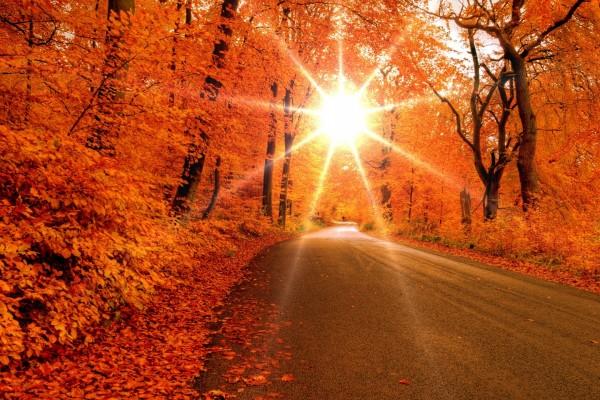 El radiante sol iluminando una carretera en otoño