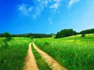 Camino en un campo verde