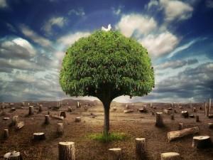 Postal: Manzano entre los restos de árboles talados