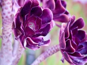 Postal: Flores púrpura con un tallo grueso