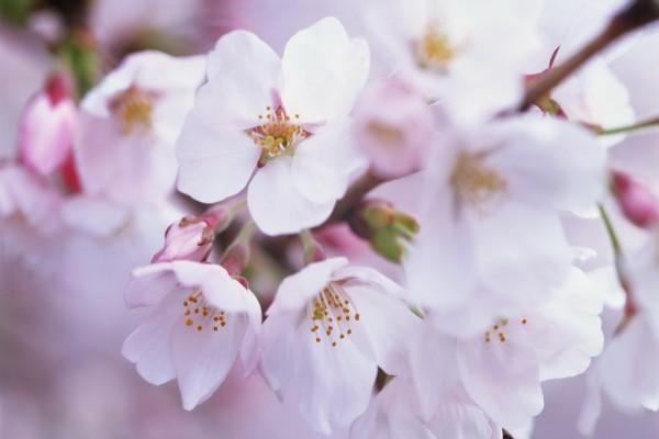Bonitas flores blancas en una rama