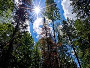 Postal: El sol iluminando a los grandes árboles