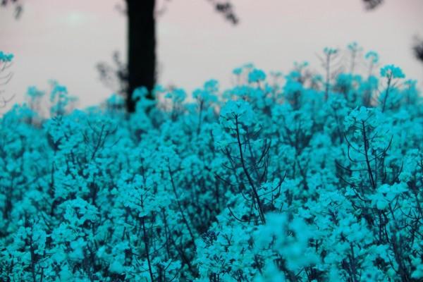 Florecillas blancas vistas al amanecer