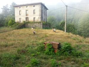 Postal: Ovejas pastando junto a una gran casa vieja