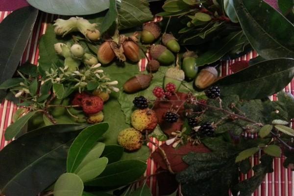 Frutos de otoño recién recolectados