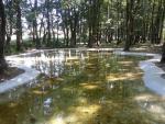 Lago artificial dentro del bosque