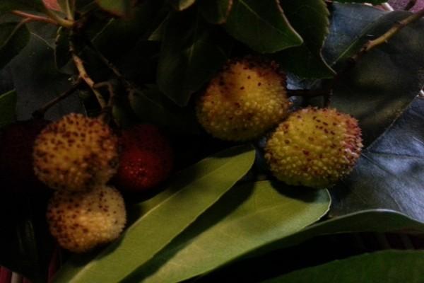Frutos sobre hojas verdes