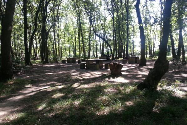 Zona de recreo entre los árboles