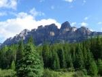 Arboleda de coníferas junto a las montañas