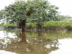 Árboles y arbustos en las aguas de un pantano