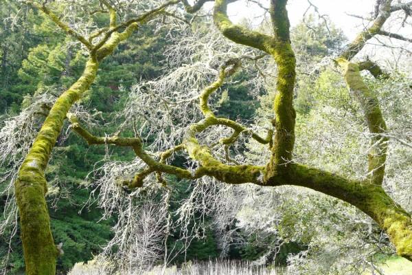 Troncos y ramas cubiertos de musgo
