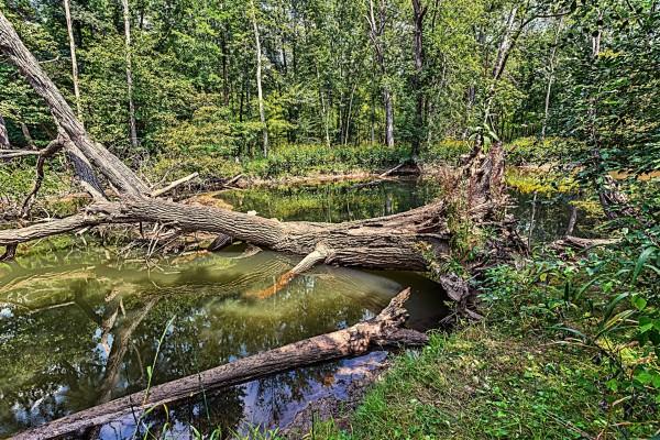 Árboles caídos sobre el cauce del río