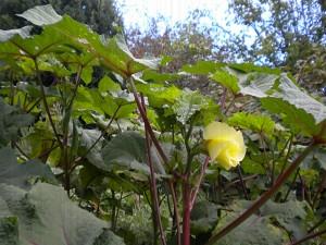 Postal: Una solitaria flor amarilla en la planta